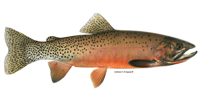 Cutthroat-Trout-fishing-guide