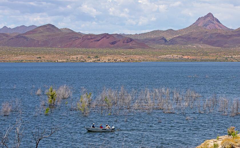 Alamo-Lake-fishing-guide-az Copy