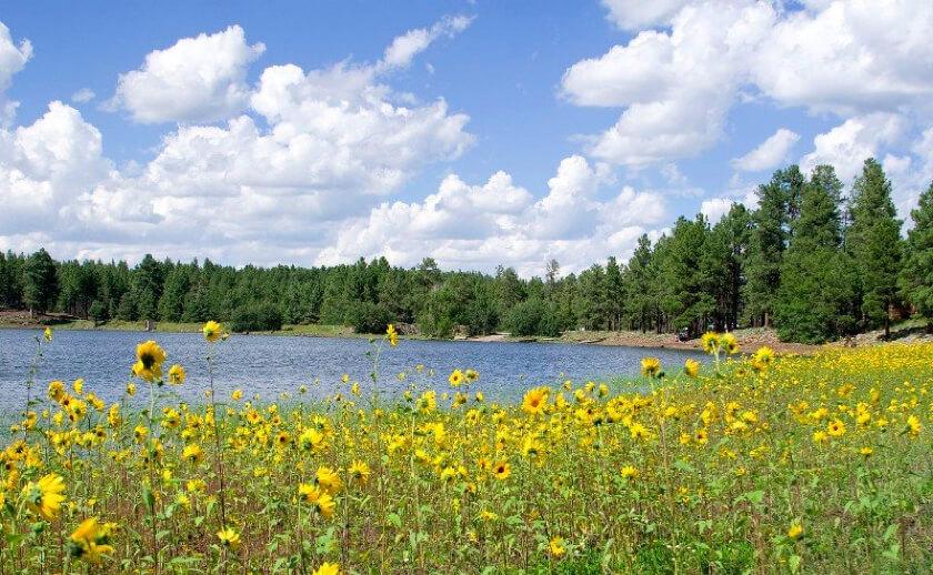 Dog-Town-Lake-fishing-guide-williams-az
