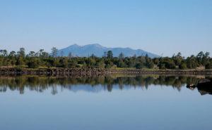 Ashurst-Lake-Fishing-Guides