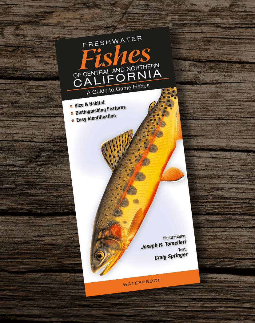 Fishing-Book-Freshwater-Fishes-of-Central-and-Northern-California
