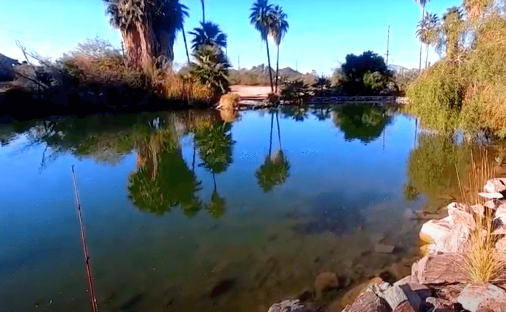 Evelyn-Hallman-Pond-Lake-Fishing-Guide-Tempe-AZ-03