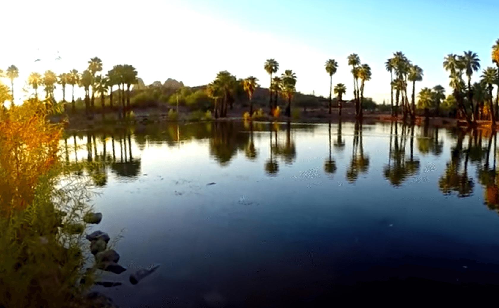 Evelyn-Hallman-Pond-Lake-Fishing-Guide-Tempe-AZ-04