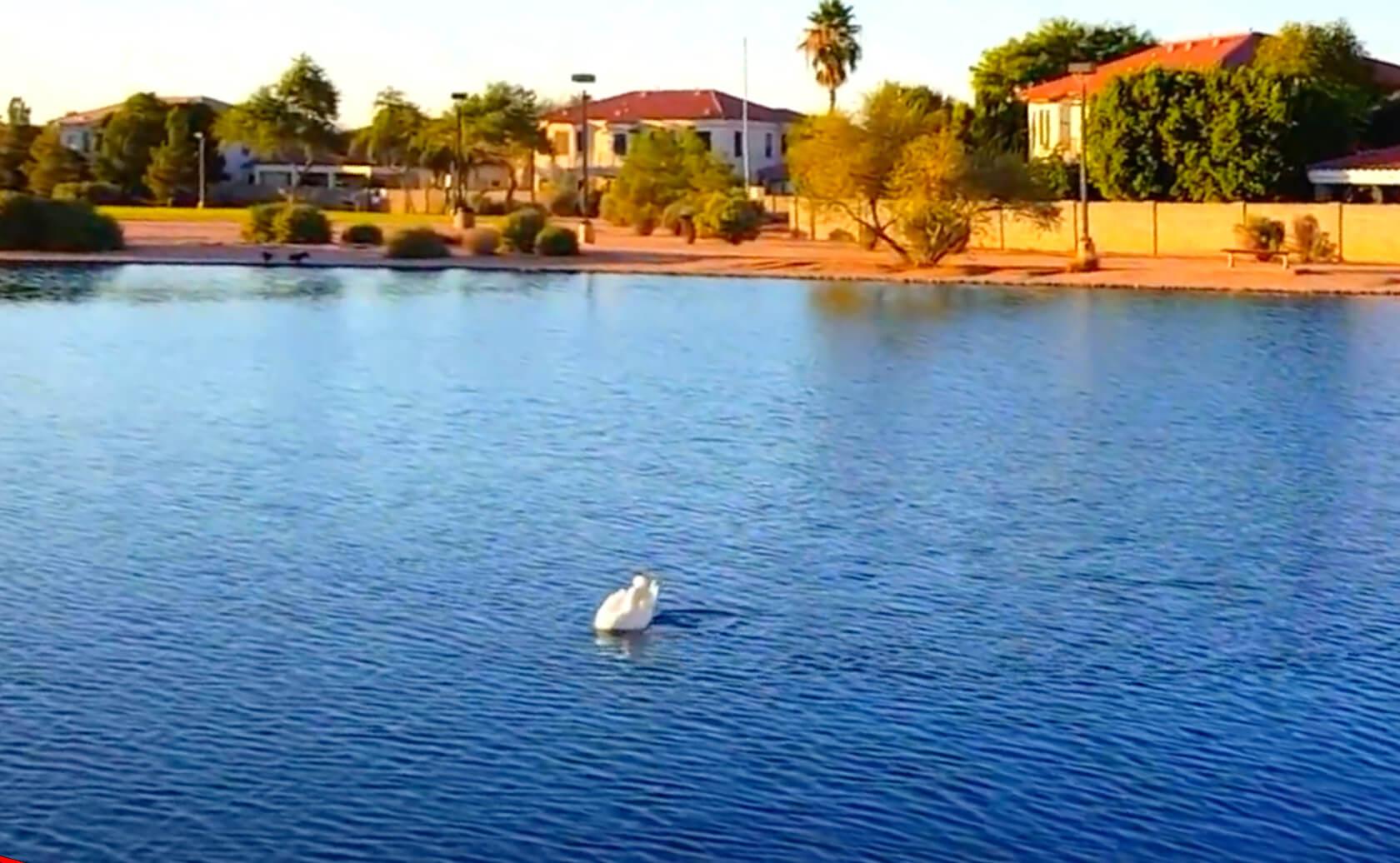 McQueen-Park-Fishing-Guide-Gilbert-AZ-01