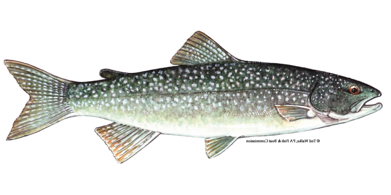 Lake-Trout-Fishing-Guide