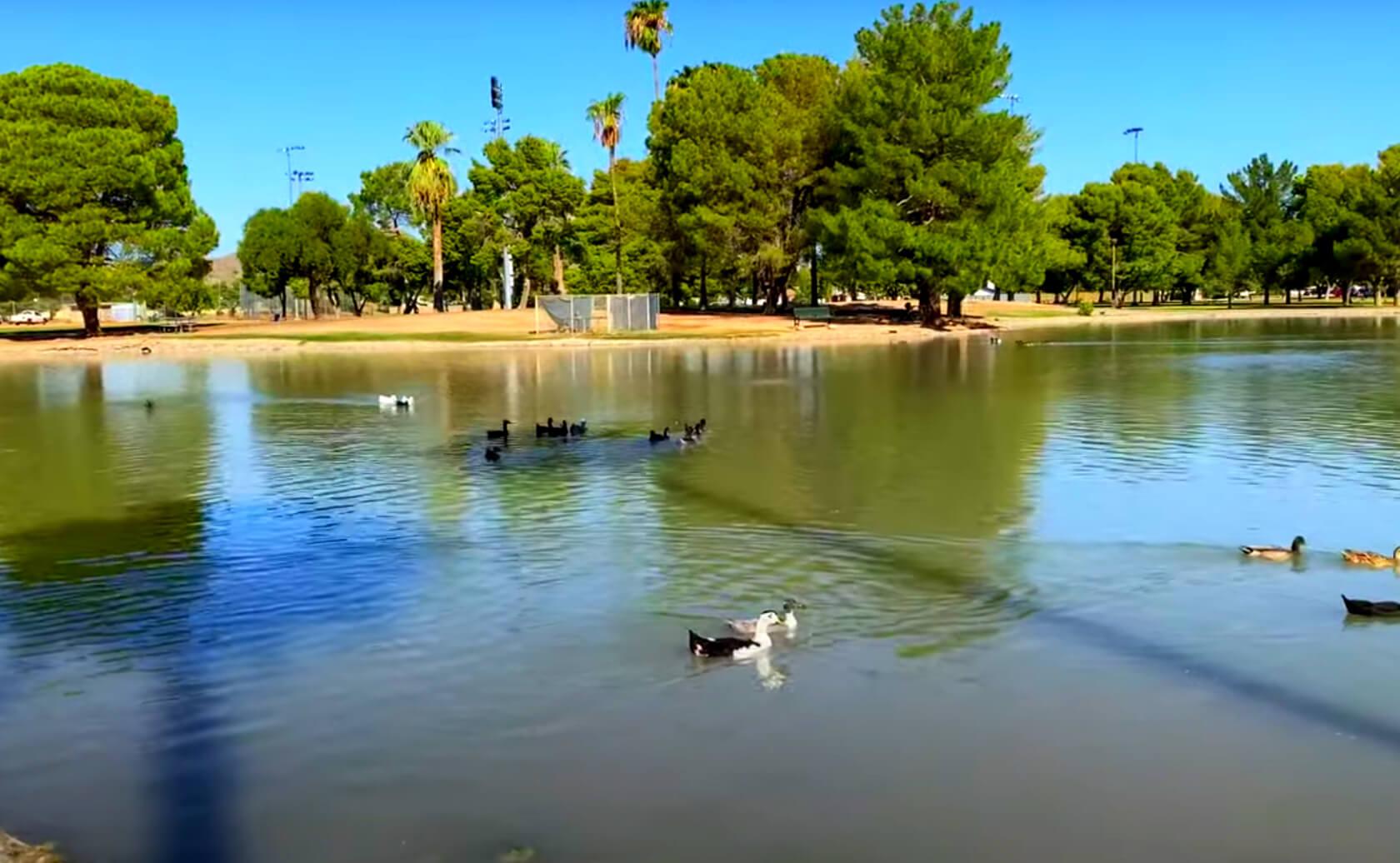 Roadrunner-Pond-Lake-fishing-guide-report-phoenix-az-02