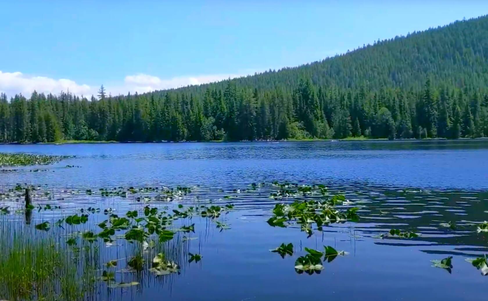 Trillium-Lake-fishing-guide-report-Oregon-04