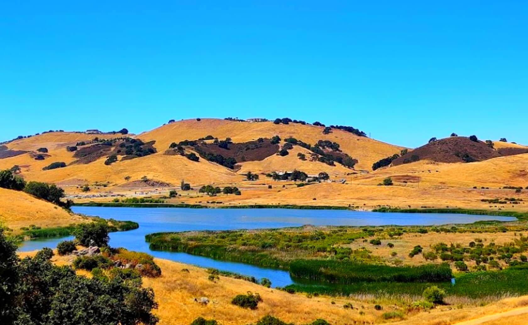 Calero-Reservoir-Lake-Fishing-Guide-Report-San-Jose-CA-05