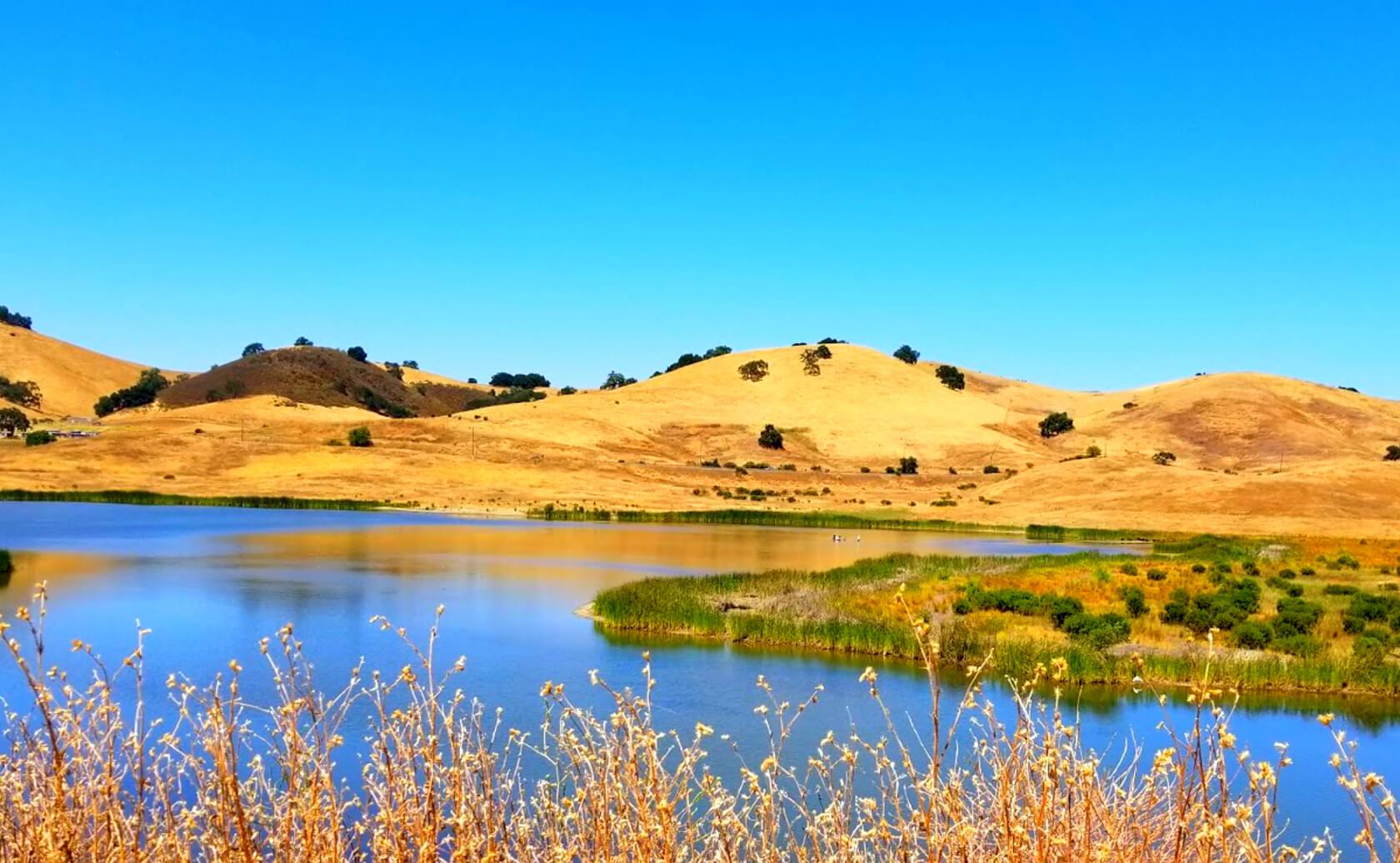 Calero-Reservoir-Lake-Fishing-Guide-Report-San-Jose-CA-09