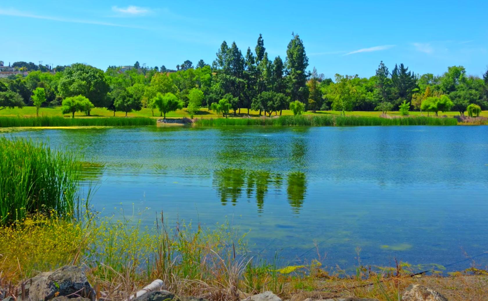 Cottonwood-Lake-Fishing-Guide-Report-San-Jose-CA-01 Copy 2