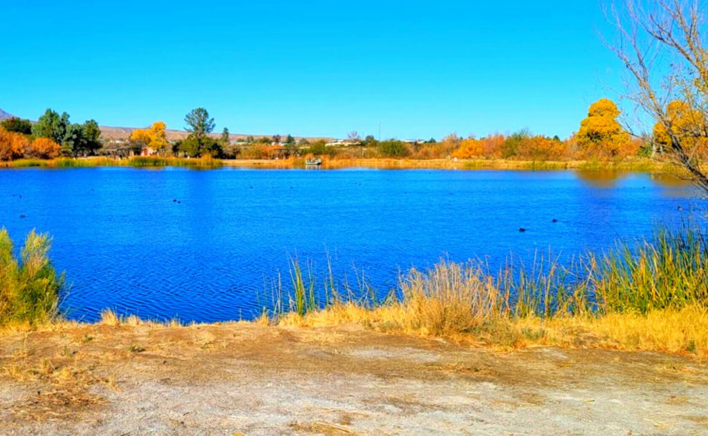 Dankworth-Pond-Lake-Fishing-Guide-Report-Safford-AZ-01