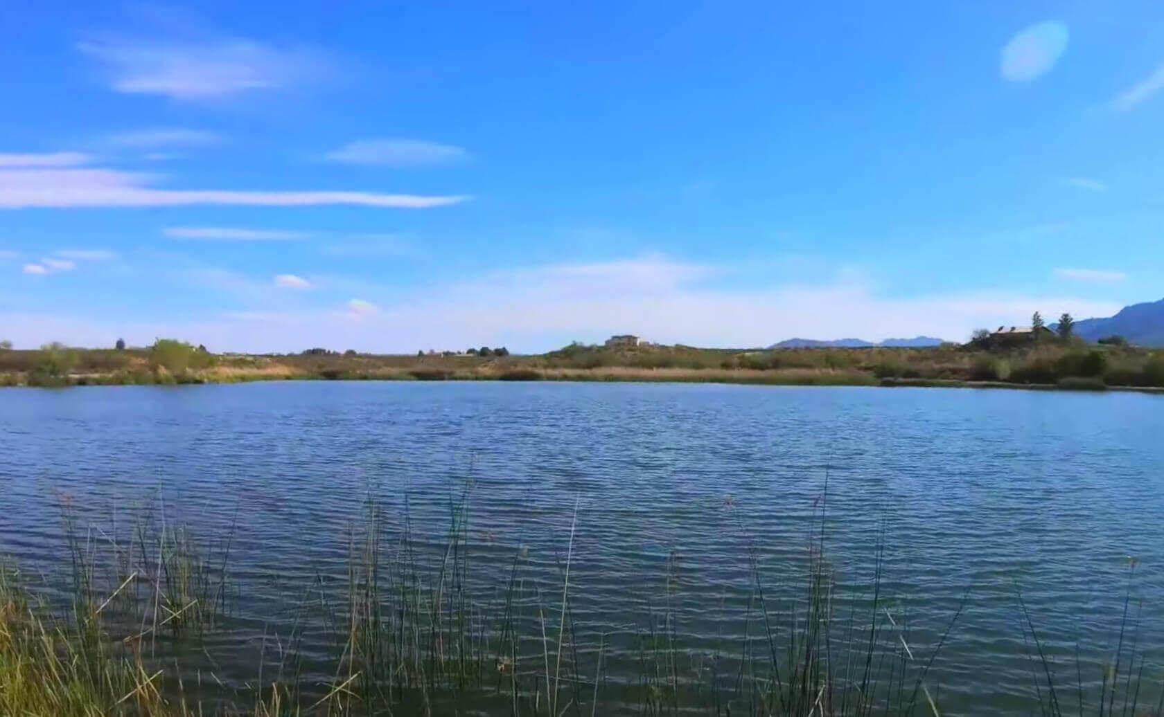 Dankworth-Pond-Lake-Fishing-Guide-Report-Safford-AZ-02