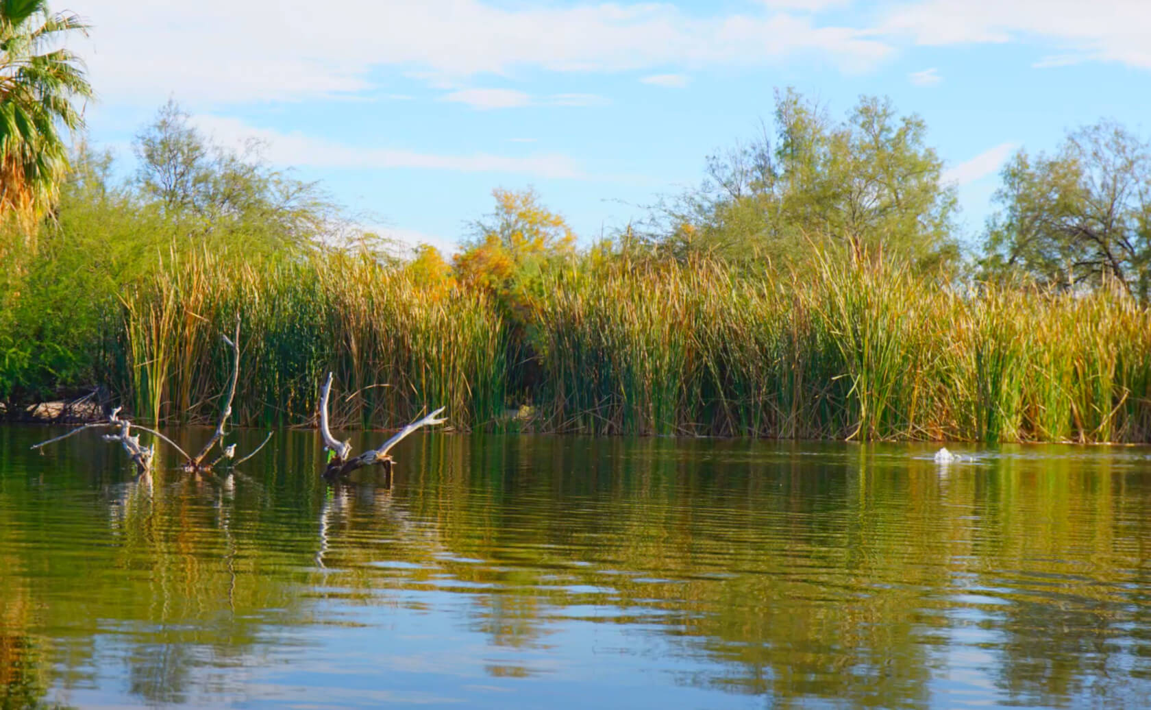 Fortuna-Lake-Fishing-Guide-Report-Yuma-AZ-05