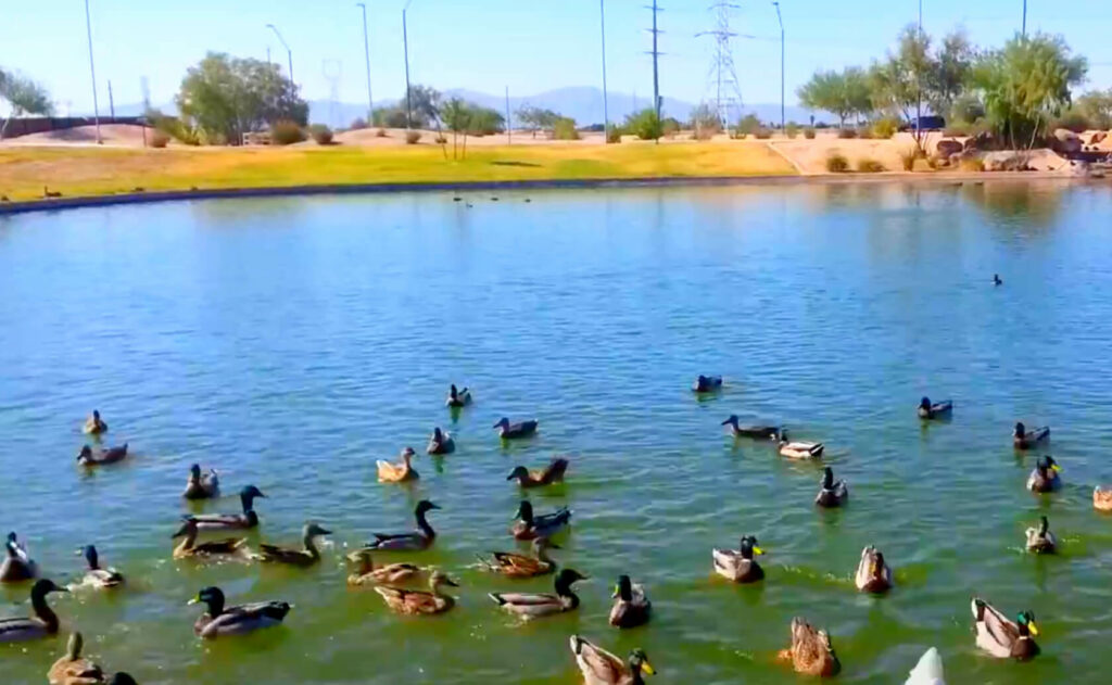 Friendship-Lake-fishing-guide-report-Avondale-AZ-01