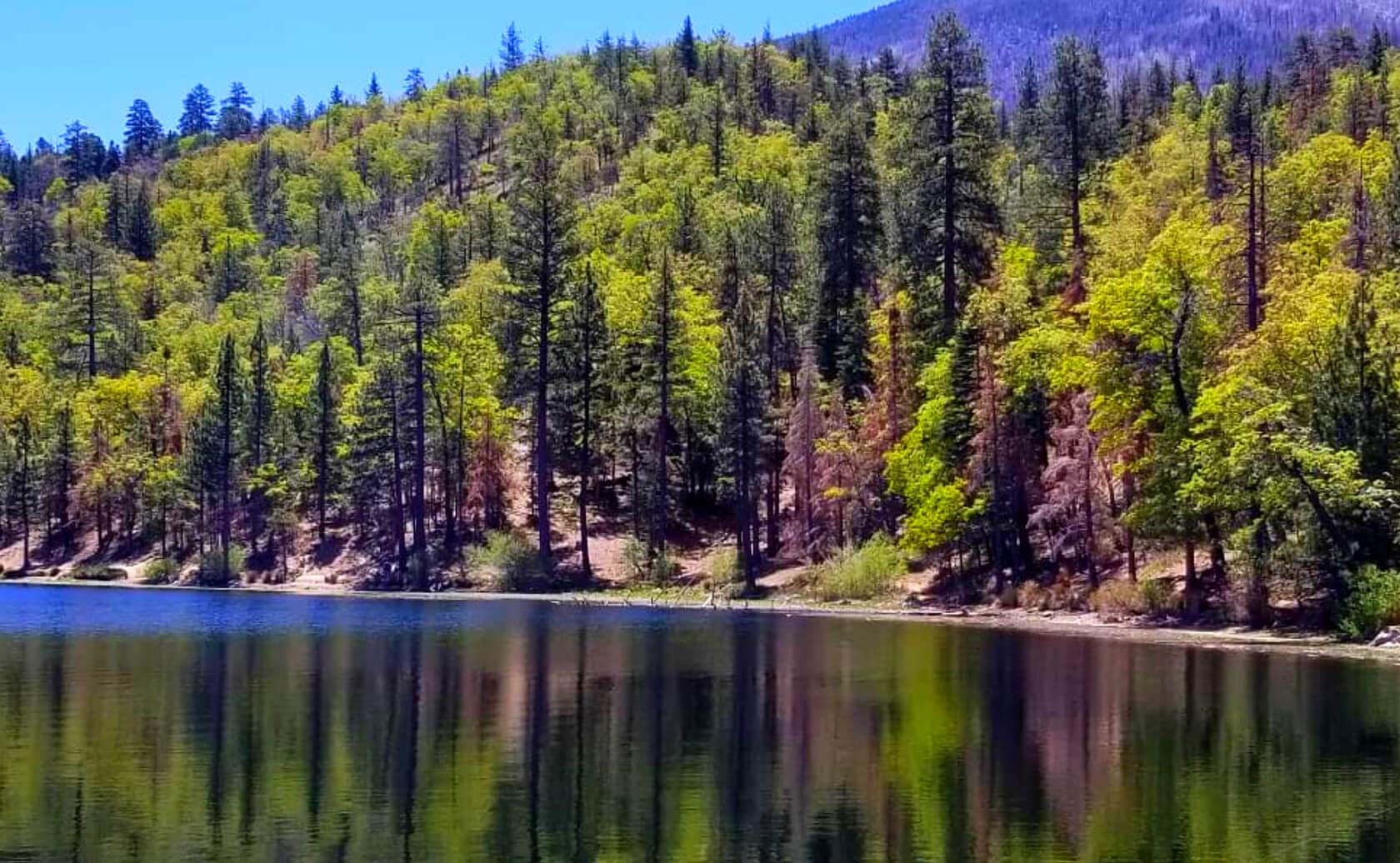 Jenks-Lake-Fishing-Guide-Report-California-01