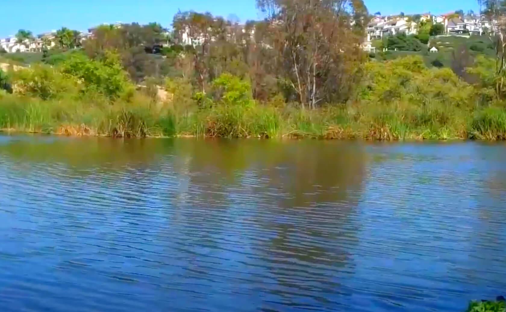 Laguna-Niguel-Lake-Fishing-Guide-Report-CA-06