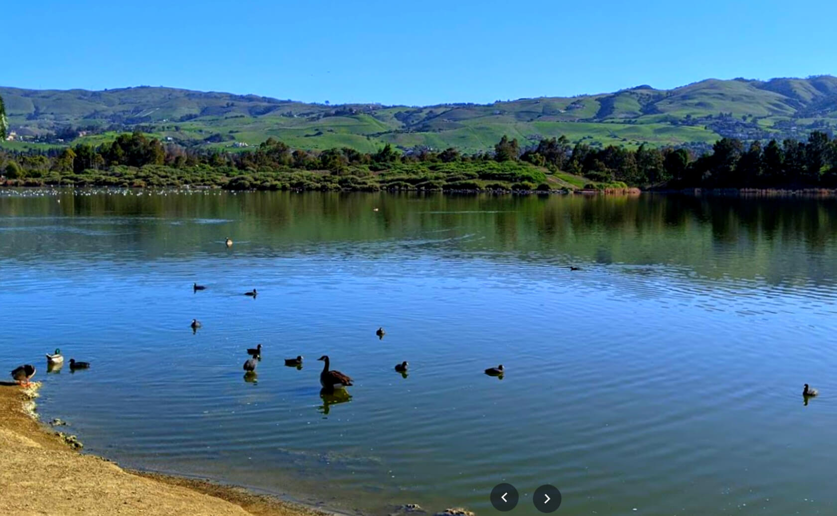 Lake-Cunningham-Fishing-Guide-Report-San-Jose-CA-01 Copy 4