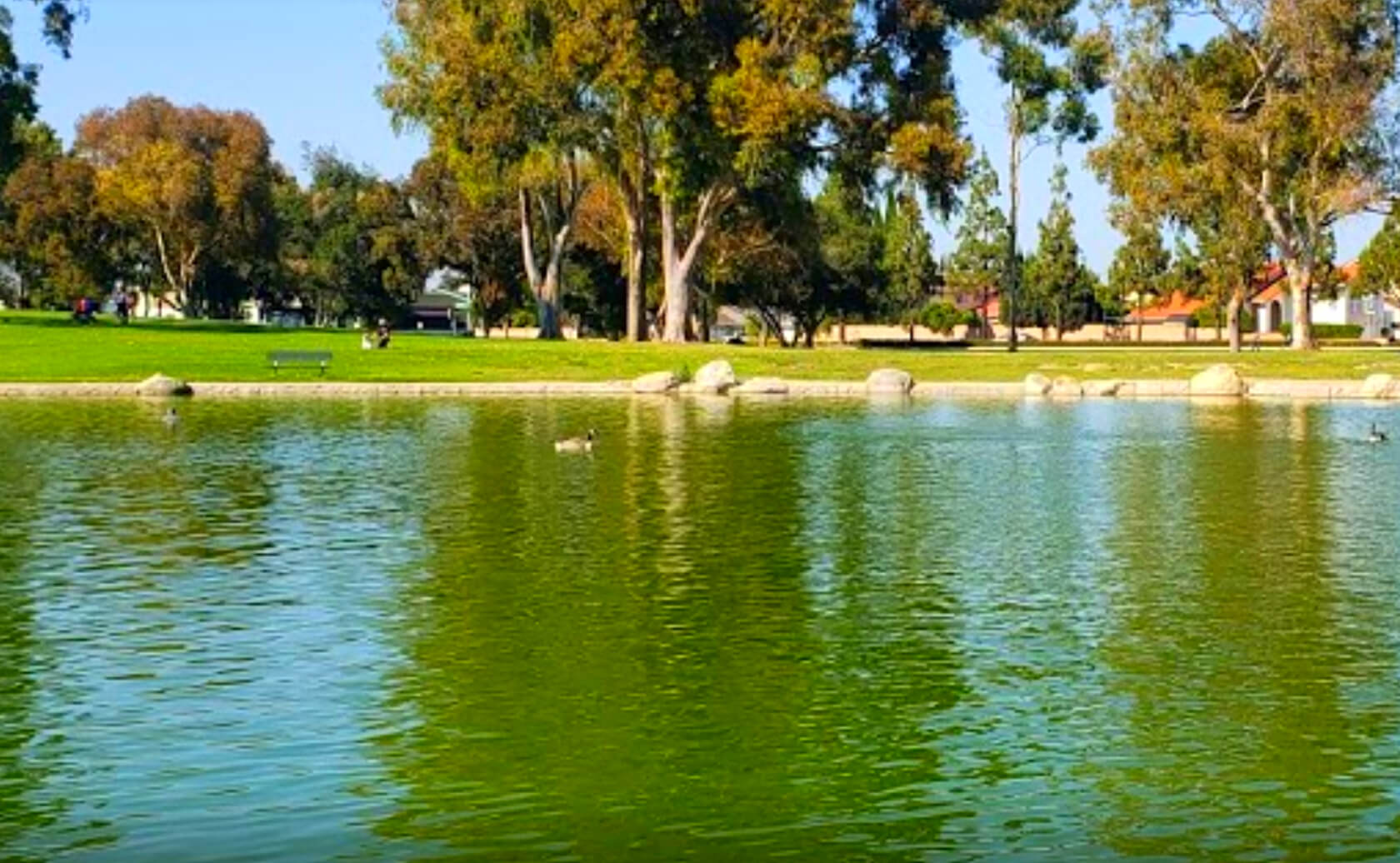 Mile-Square-Park-Lake-Fishing-Guide-Report-Fountain-Valley-CA-01