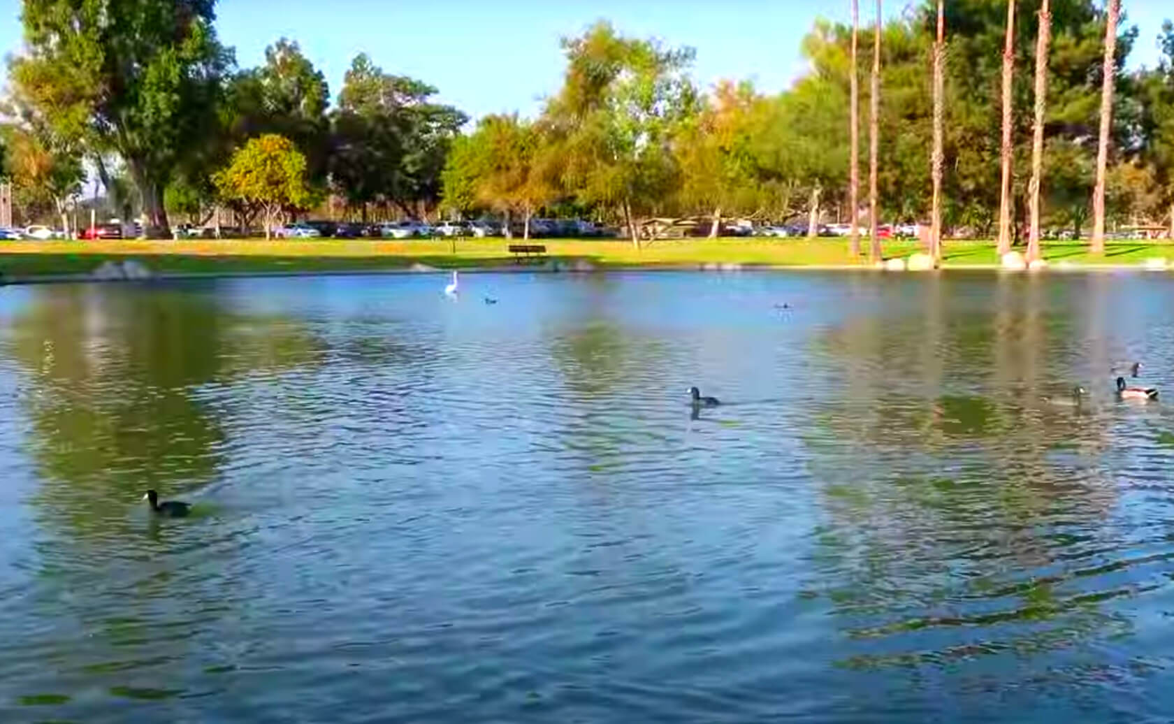 Mile-Square-Park-Lake-Fishing-Guide-Report-Fountain-Valley-CA-02