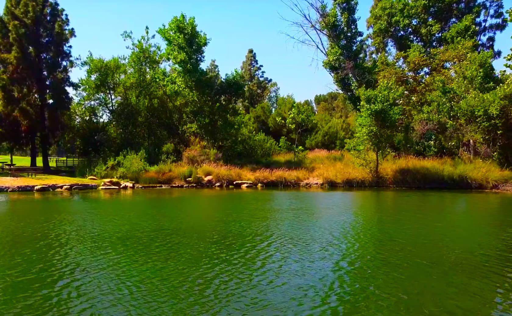 Yorba-Regional-Park-Lake-Fishing-Guide-Report-Anaheim-CA-01 Copy 8