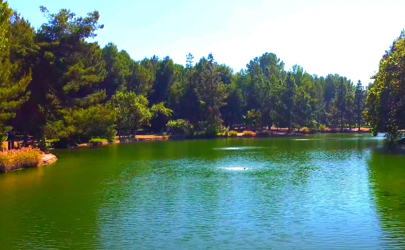 Yorba-Regional-Park-Lake-Fishing-Guide-Report-Anaheim-CA-02