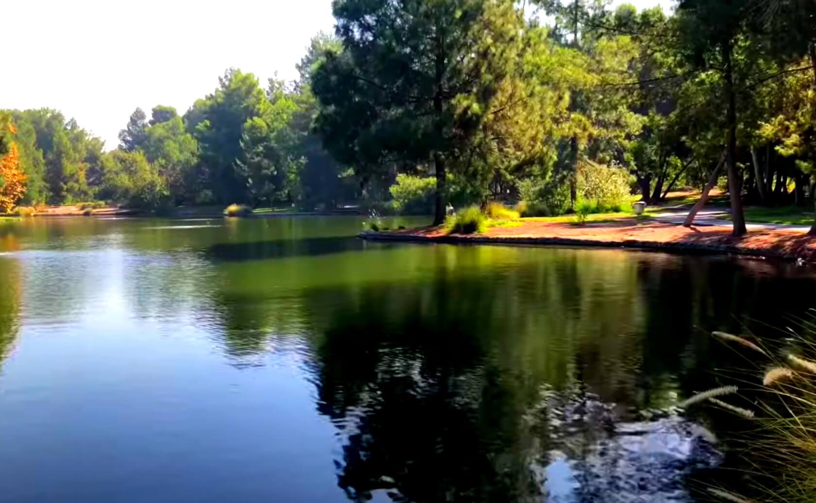 Yorba-Regional-Park-Lake-Fishing-Guide-Report-Anaheim-CA-07
