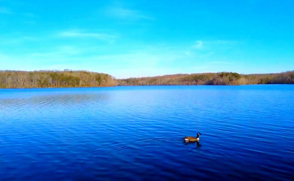 Burke-Lake-Fishing-Report-Guide-Virginia-VA-03
