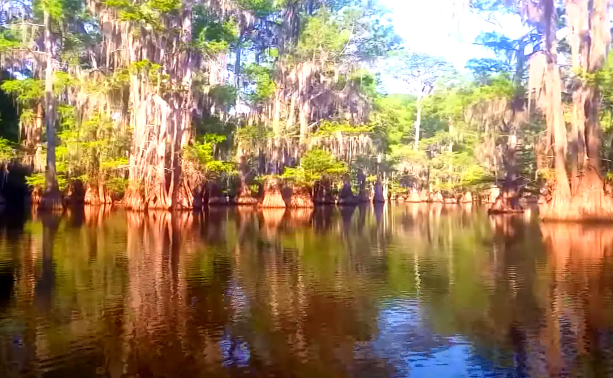 Caddo-Lake-Fishing-Report-Guide-LA-TX-02