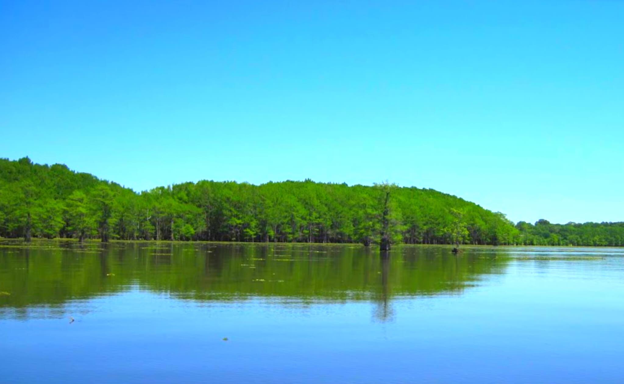 Caddo-Lake-Fishing-Report-Guide-LA-TX-03