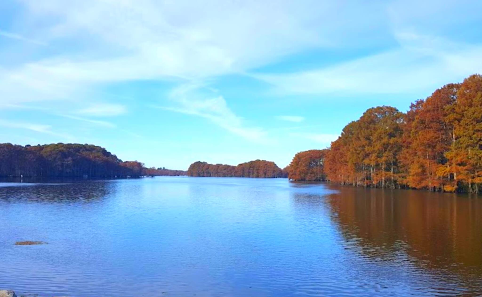 Caddo-Lake-Fishing-Report-Guide-LA-TX-04