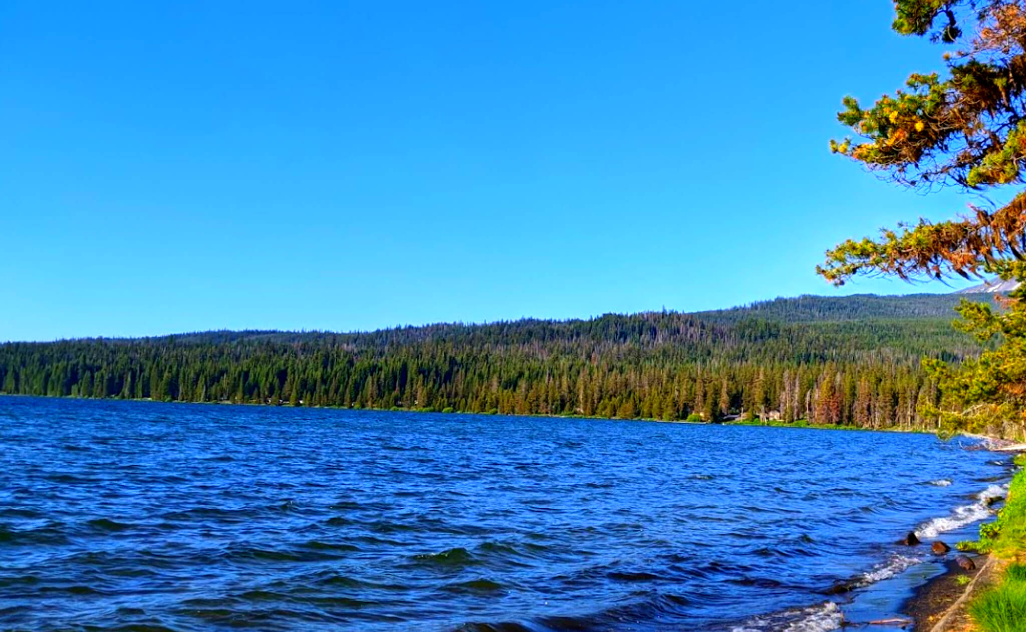 Diamond-Lake-Fishing-Report-Guide-Oregon-05