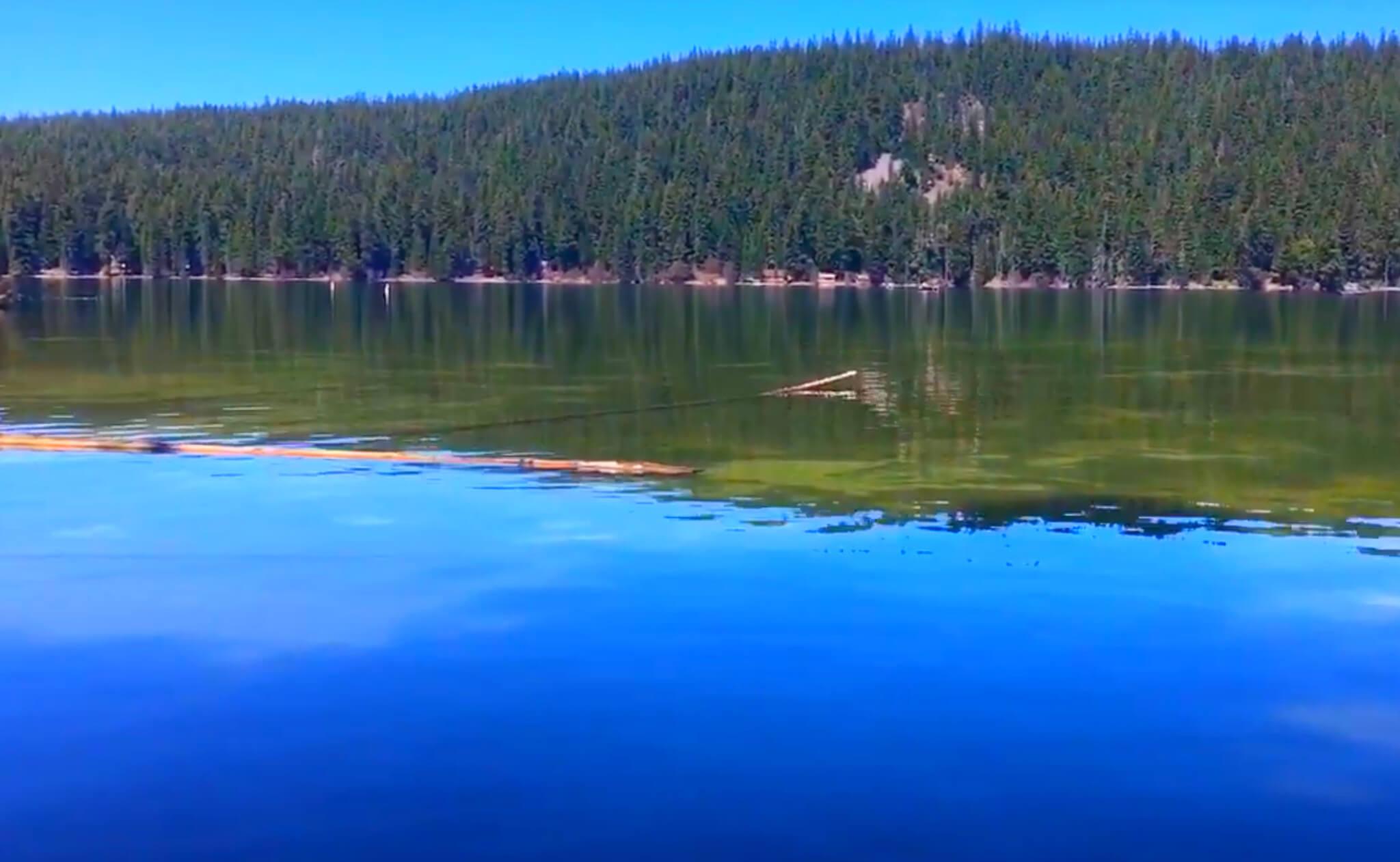 Odell-Lake-Fishing-Report-Guide-Oregon-7