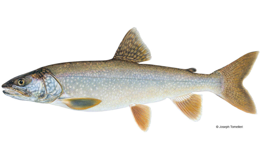 Lake-Trout-Fishing-Guide-How-to-Catch-1
