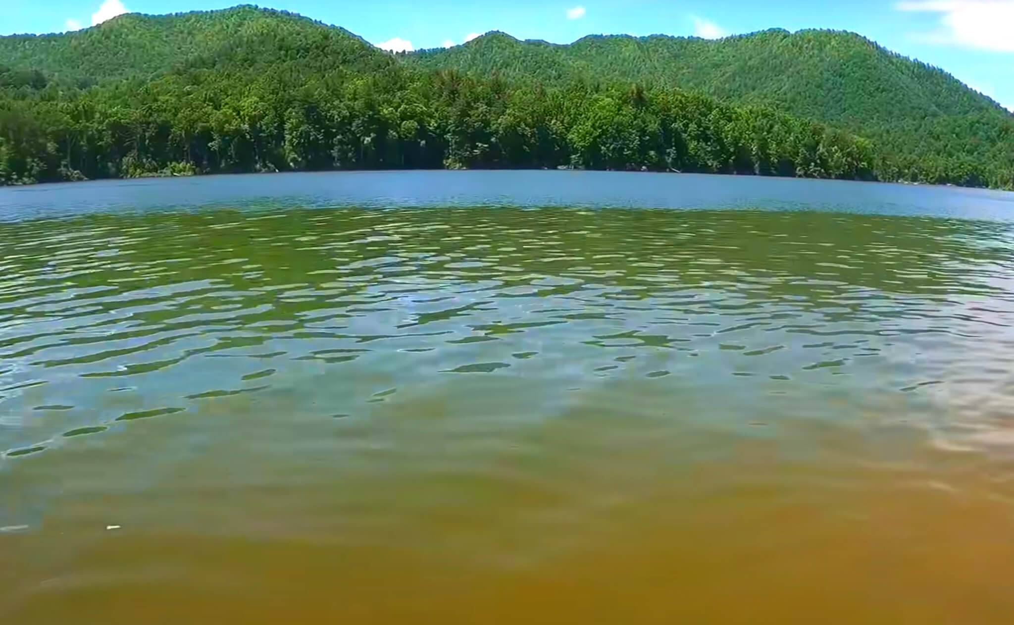 Watauga-Lake-Fishing-Report-Guide-Tennessee-TN-04